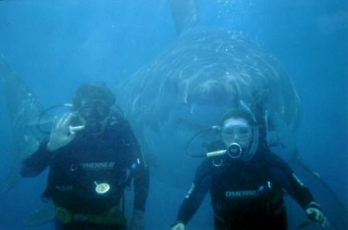 Real shark behind an unsuspecting couple - in Australia