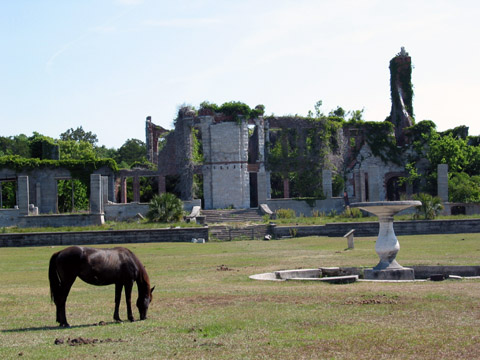 Wild horses at the ruins of the Dungeness Mansion at Cumberland Island, Georgia.