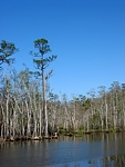 ICW Apalachacola. This is marked as impenetrable swamp on the charts.