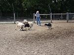 herding 1 003