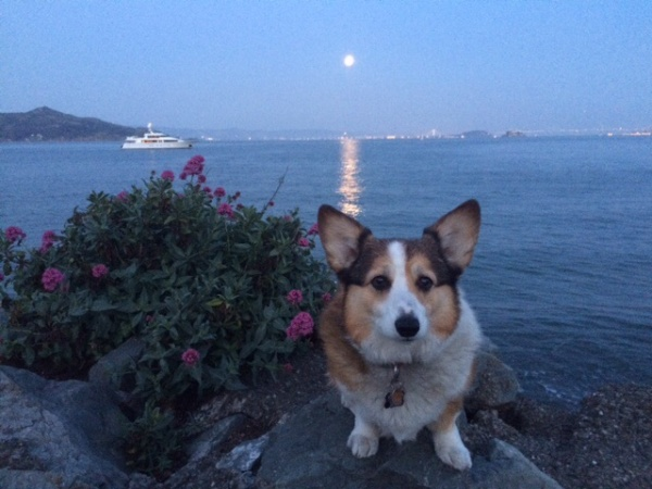 Evening walk with my Human.