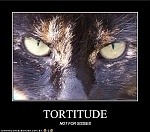 Tortitude - Not for sissies