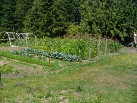sept 1 garden 029